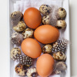 Easter still life with eggs — Stock Photo