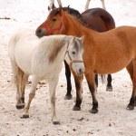 Horses — Stock Photo #42921517