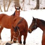 Horses — Stock Photo #42921589
