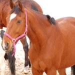 Horses — Stock Photo #42921617