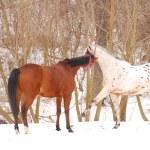 Horses — Stock Photo #42921737