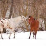 Horses — Stock Photo #42921751