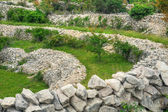 Sheep pasture, drystone walls, Rudine, Krk island, Croatia — Stock Photo