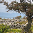Pastures, drystone walls near Rudine, Krk island, Croatia — Stock Photo
