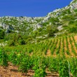 Vineyards, southern coast of Hvar island, west of Sveta Nedjelja, Croatia — Stock Photo