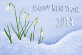 Happy New Year 2014 greeting card, group of snowdrops — Stock Photo