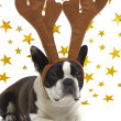 Dog with antlers — Stock Photo #13913143