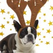 Dog with antlers — Stock Photo