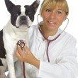 Vet doctor with dog — Stock Photo