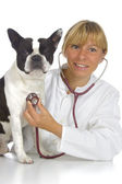 Vet doctor with dog — Stok fotoğraf