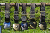 Group of cow bells — Stock Photo