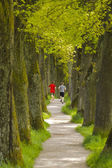 Tree alley in Bavaria — Stock Photo