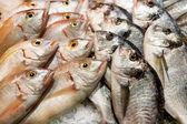 Fresh fish at the market — Stock Photo