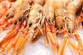 Fresh crabs - shrimps — Stock Photo