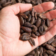 Handful of cacao beans - Stock Photo