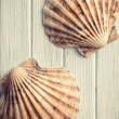 Stock Photo: Scallops on wooden floor