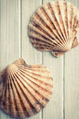 Scallops on wooden floor — Stock Photo