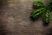 Fir branch on wooden backgound — Stock Photo