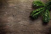 Fir branch op houten achtergrondkleur — Stockfoto