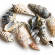 Various sea shells — Stock Photo