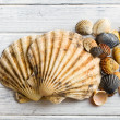 Sea shells on white wooden table — Stock Photo