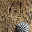 Sea shell on old wooden table — Stock fotografie
