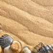 Sea shells on sand — Stock Photo