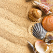 Sea shells on sand — Stock Photo #28229243