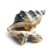 Sea shell — Stockfoto