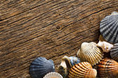 Sea shells on old wooden table — Stock Photo