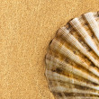 Stock Photo: Sea shell on sand