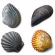 Various sea shells on white background — Stock Photo