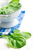 Green spinach leaves  — Stock Photo