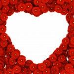 Heart of gerberas flowers — Stock Photo #16487401