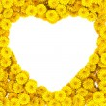Heart of gerberas flowers — Stock Photo #16487403