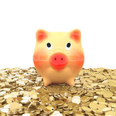Pink piggy bank — Stock Photo