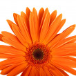 Gerbera flower. Hight res — Stock Photo