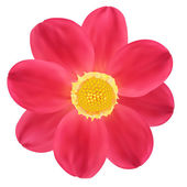 Red Dahlia Flower. Vector illustration — Stock Vector