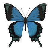 Farfalla isolato su bianco. illustrazione vettoriale — Vettoriale Stock