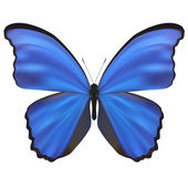 Butterfly isolated on white. Vector Illustration — Stock Vector