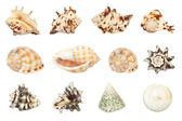 Set of shell. All in focus. High res. Isolated on a white backgr — Foto Stock