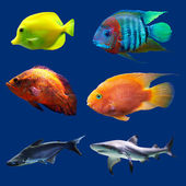 Set of tropical fish. Isolated on blue. Hight res. — Stock Photo