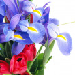 Flower bouquet purple and red — Stock Photo