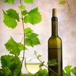 Wine and grapevine — Stock Photo