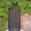 Old wooden door with ivy — Foto Stock
