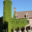 Stock Photo: Tower covered with green ivy, Bruges, Belgium