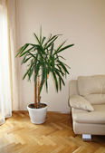 Modern sofa with plant — Stock Photo