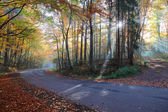 Autumn forest road in the woods — Stock Photo