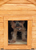 Dog at small wooden house. — Стоковое фото