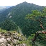 Sokolica, Pieniny Mountains, National Park in Poland — Stock Photo #35717419